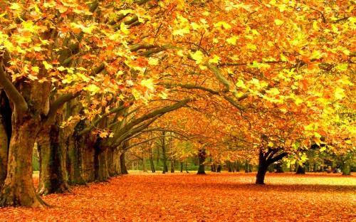fall-desktop-wallpaper