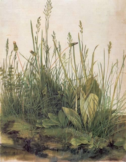 Albrecht_Dürer05