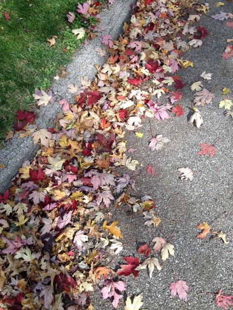 leavesin street