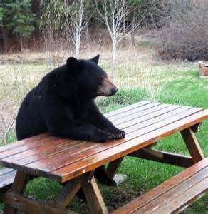 Waiting for a spoiled adolescent camper to eat