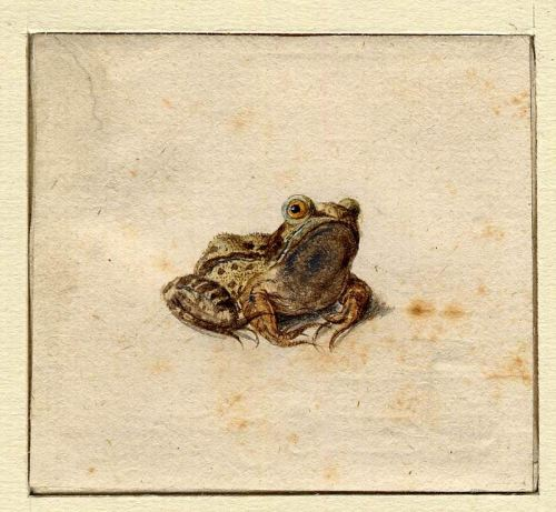 Hans Hoffmann, Frog