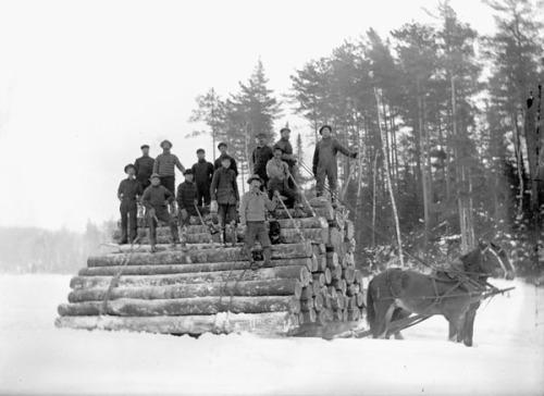 Horses_hauling_logs_in_the_Ottawa_Valley_Ottawa