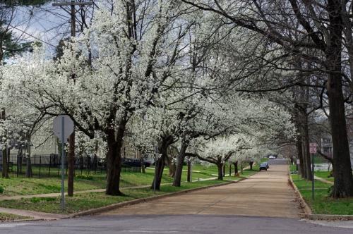 Kirkwood is Blooming